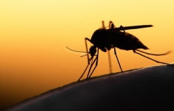 Silhouette of a mosquito on a yellow background