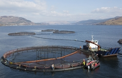 Scottish salmon farms